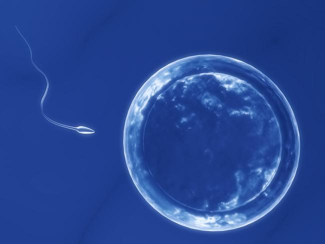 An analysis of 7500 studies since the 1970s indicates male sperm production among Western populations has fallen 59.3 per cent. Picture: Thinkstock