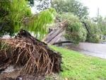 A tree down in Eyre Street, North Ward, Townsville. Picture: Evan Morgan