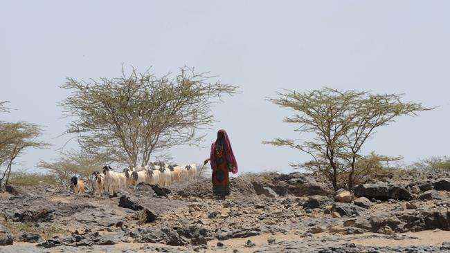 This 2008 picture shows a Gabra woman watching her goats near Balesa village in North Horr, some 730 kms northeast of Nairobi. (Pic: AFP PHOTO/SIMON MAINA)