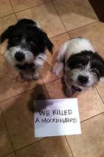 "<span>Just sinful. Picture:</span>  <span><a href=""http://dogshaming.tumblr.com/"">Dog Shaming</a> <br /> </span>"