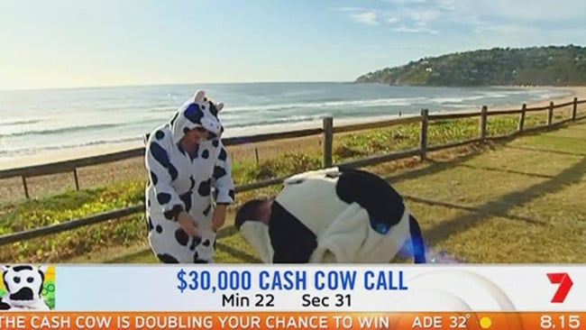 The Cash Cow's head falls to the ground as the person inside grabs their head. Picture: Sunrise.