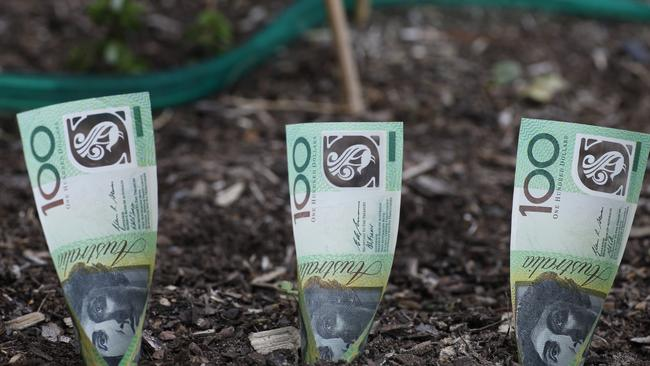 Turn a modest money garden into a financial forest.