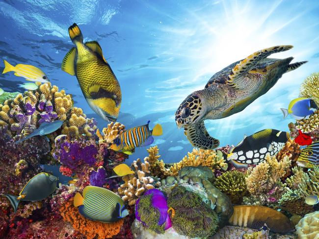 The Great Barrier Reef is famous for its colourful fish and coral.