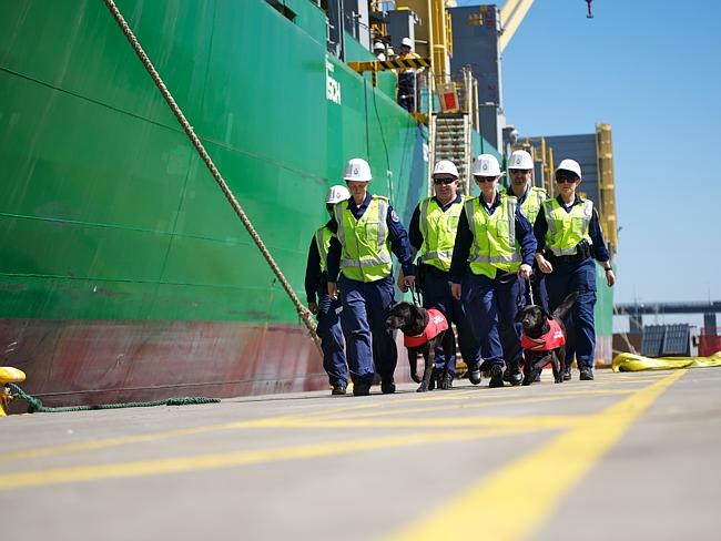 Officers and detector dogs working on the waterfront. Picture: Australian Customs and Bor