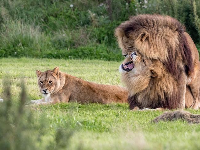 Los pares consiguen feisty.  Foto: Russ Bridges / Mercury Press