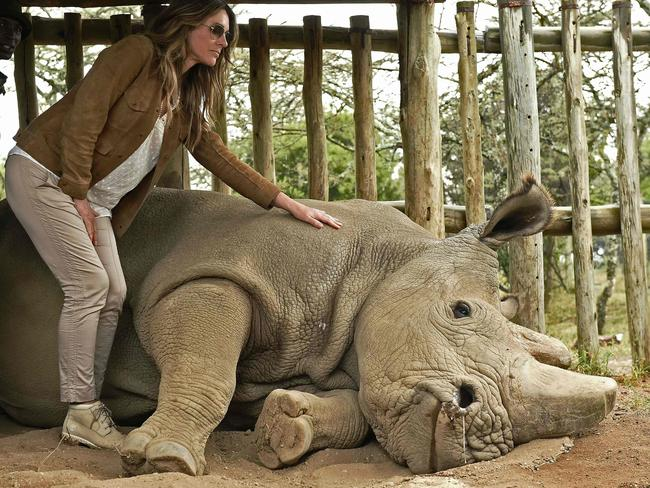 British actor Liz Hurley poses next to Sudan at Ol Pejeta Sanctuary during the Giants Club Summit conservation meeting in Laikipia in 2016. Picture: AFP/Carl de Souza