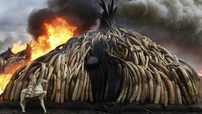 This picture shows one stack of burning elephant tusks, ivory figurines and rhinoceros horns at the Nairobi National Park on April 30, 2016. Picture: Fredrik Lerneryd/AFP.