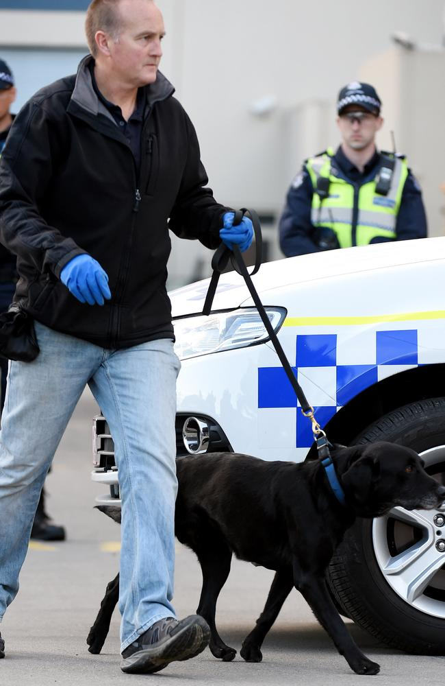 A sniffer dog at the Rebels clubhouse in Sunshine West. Picture: Nicole Garmston