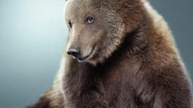 This hulking bear definitely knows how to work his angles ... we bet he gets all the honey(s). Picture: Reddit