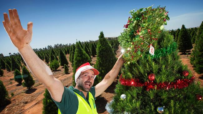 Melbourne Christmas Tree Farms Open For The Season