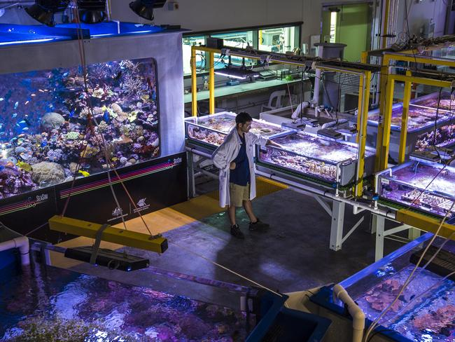 A researcher at the National Sea Simulator. Picture: Christian Miller