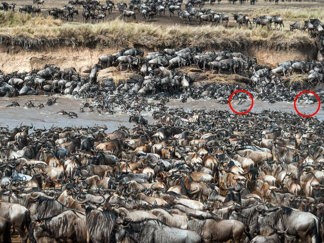 The two zebras can be spotted here. Picture: Caters News Agency