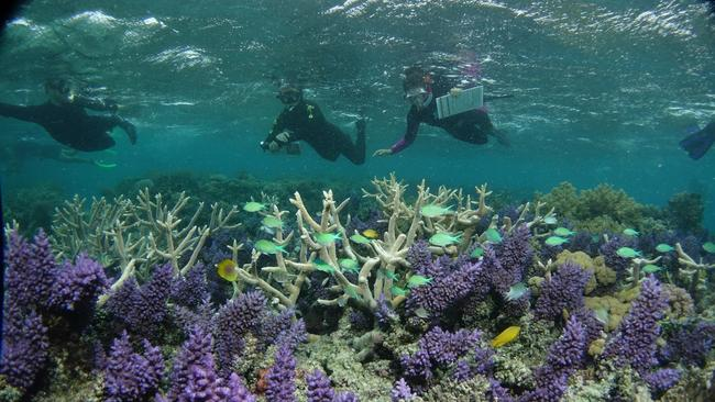 $500 million has been pledged to help protect the Great Barrier Reef.