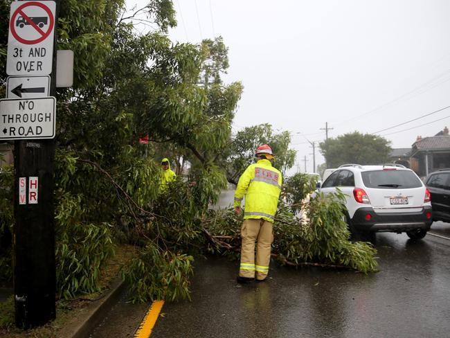 A large tree down on Forest Rd, Arncliffe. Photo: John Grainger
