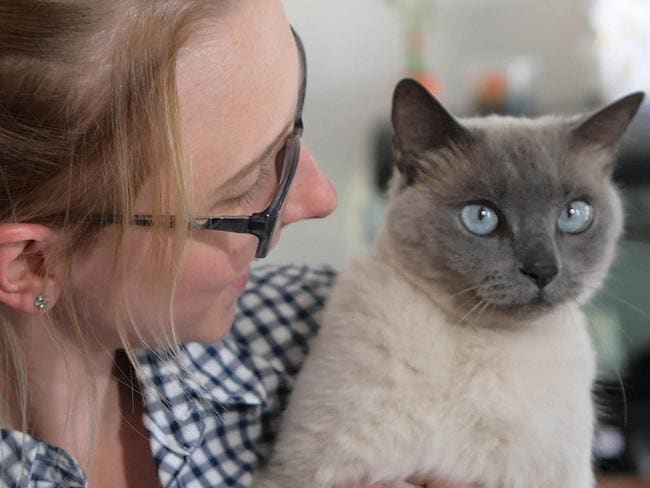 Ally The Cat was relocated to Krista Abbott form the Sunshine Coast after ten years of separation. Krista now lives in Unanderra south of Sydney. Very timid, Ally was reluctant to emerge from under the bed 18-10-2017. (NEWS CORP/Simon Bullard)