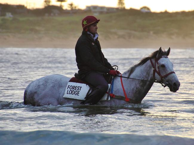 Puissance De Lune is a $3 chance with TAB to make a winning return. Picture: Peter Morganti