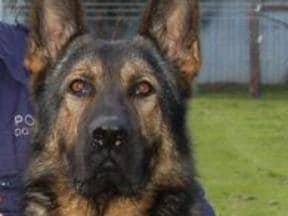Man hospitalised after attacking cop dog