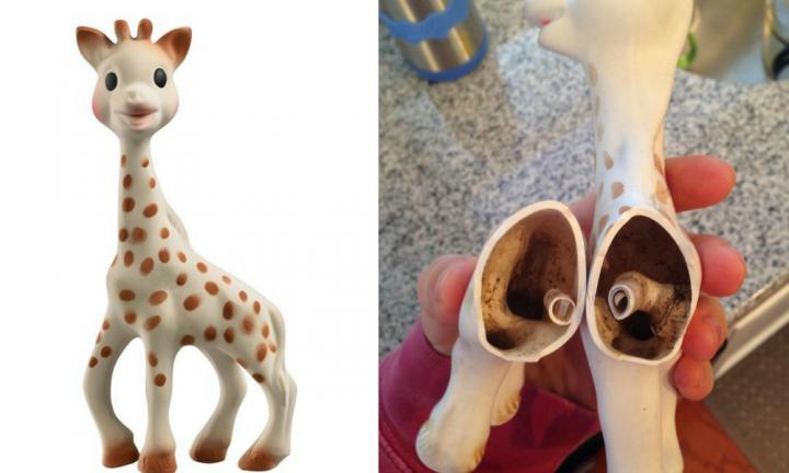 Parents horrified by mould inside Sophie the giraffe