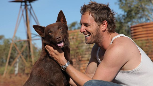 STANDOUT PERFORMANCE: Koko the dog with Josh Lucas in Red Dog, one of the best Australian films of the year.