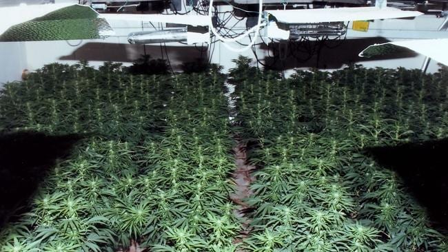 Police discovered a number of cannabis factories and linked them to the Wrights. Picture: SNAPPER MEDIA
