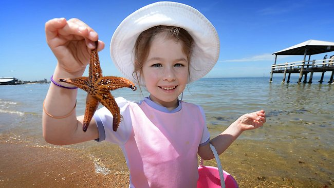 Chili Andrew, 5, shows off a star fish she found at Port Melbourne beach. Picture: Tony Gough