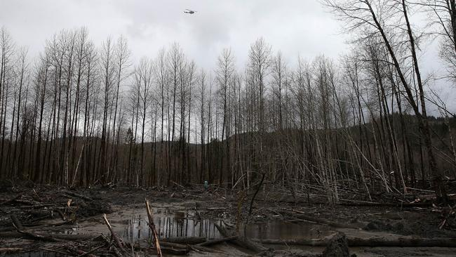 A view of mud and debris from the deadly mudslide in Oso, Washington. Picture: Justin Sullivan