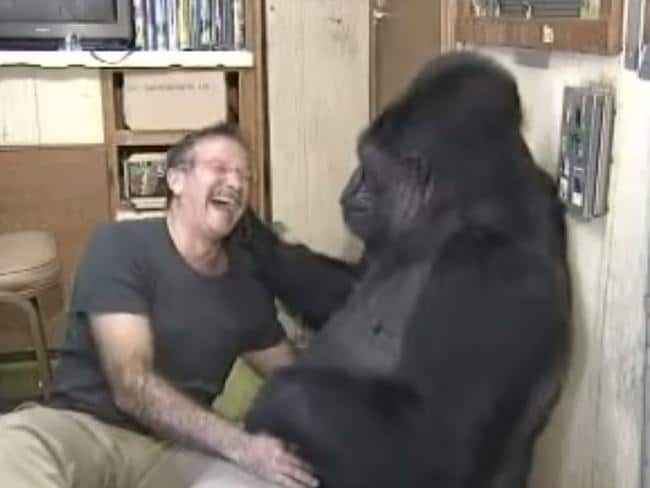 Tickle monster ... Koko and Robin Williams tickle each other.