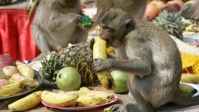 Monkeys enjoy fruits in front of an ancient temple during the annual monkey buffet in Lopburi province 150 Kilometers north of Bangkok, 25 November 2007. More than 2,000 kilos of fruits and vegetables were offered to monkeys during the annual festival. AFP PHOTO/Pornchai KITTIWONGSAKUL