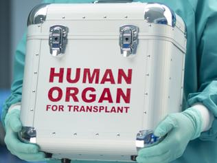 Generic photo of a surgeon holding a case for human organ donation. Picture: Supplied