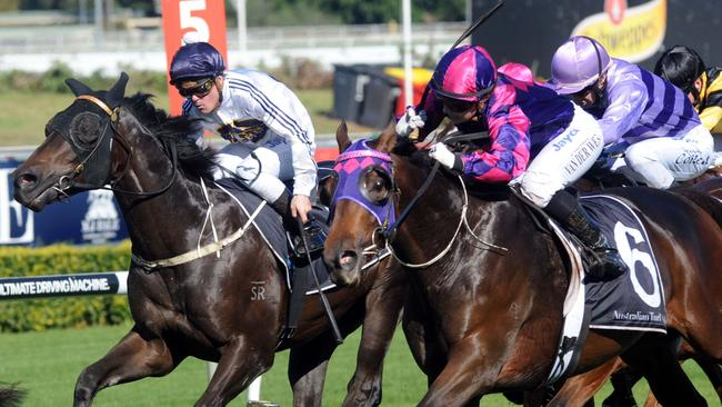Dowdstown Charlie (outside) along with stablemate Foreign Prince will contest the Inglis Bonus Handicap (1400m) at Saturday's Randwick Kensington meeting.