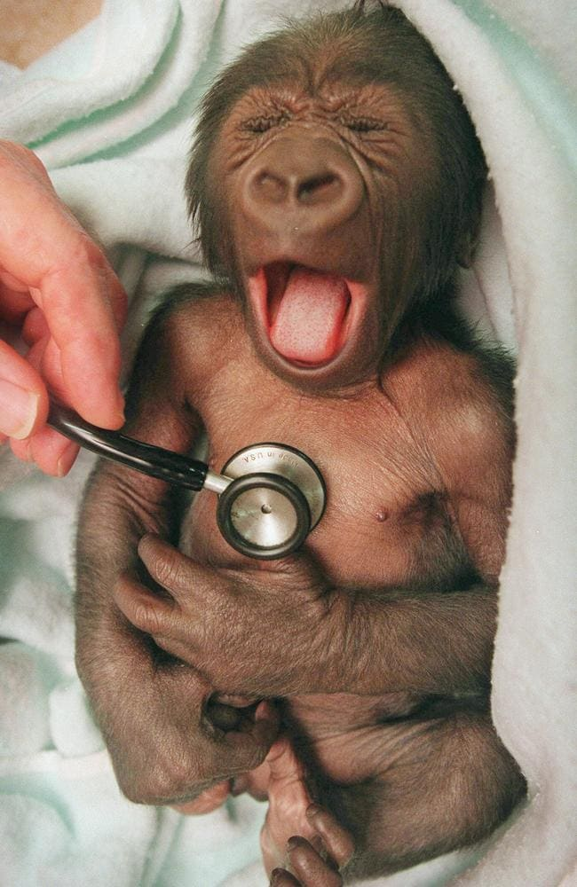 Yakini, before he was named, gets a check-up from a neonatal specialist
