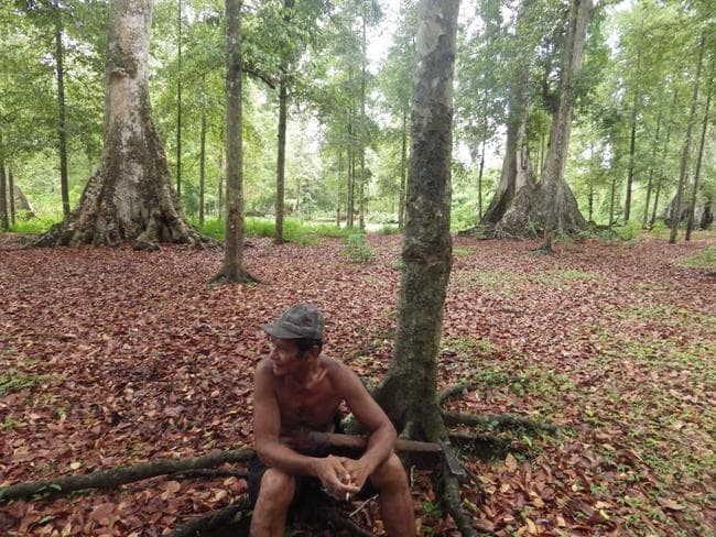 A Run Island local sits in the nutmeg forest. Picture: Simon Proudman / Newsmodo