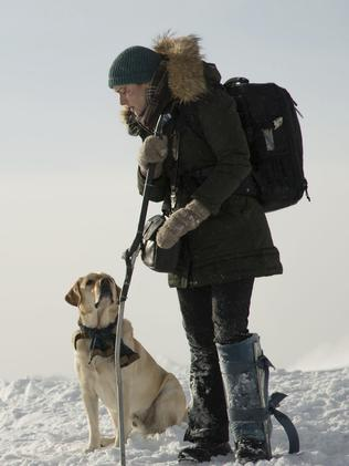 This dog gives the most convincing performance to be found in The Mountain Between Us.