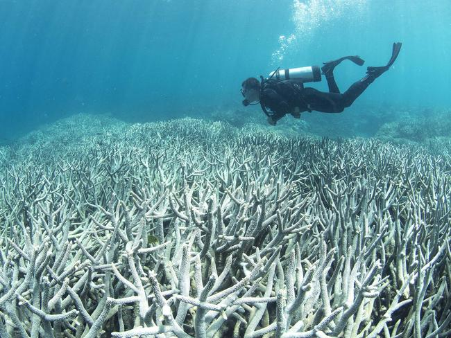 A diver checking the bleached coral at Heron Island on the Great Barrier Reef. Picture: AFP/XL Catlin Seaview Survey