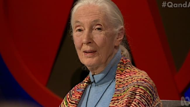 Primate expert Jane Goodall was invited to find a parallel between primates and politicians.