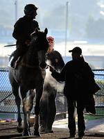 <p>Trainer Mike Moroney follows Damien Oliver after ridding Glass Harmonium, lead by strapper Shiree Knowles. Picture: Nicole Garmston</p>