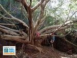 PARKS FOR PEOPLE - Scott O'Loughlin - Dales Gorge Tree Karajini National Park.