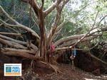 PARKS FOR PEOPLE - Scott O'Loughlin - Dales Gorge Tree Karajini National Park.