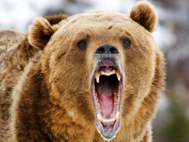 Aussie stocks slump into bear market
