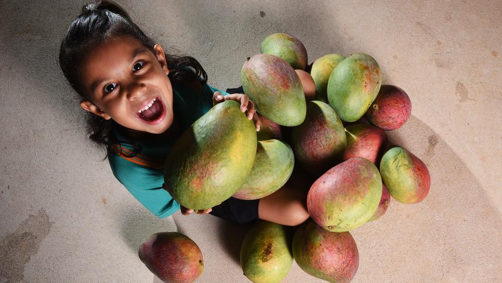 Kiril Tipo, 5, with some very large Pineapple Mango's which her parents picked from a tree in Adelaide River. PICTURE: Helen Orr