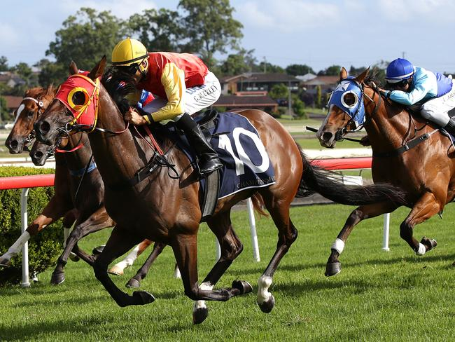 Taree provides the only thoroughbred meeting in NSW on Tuesday. Picture: Peter Lorimer