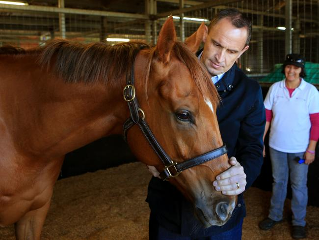 Chris Waller has Hawkspur aimed specifically at the Turnbull Stakes. Picture: Mark Evans