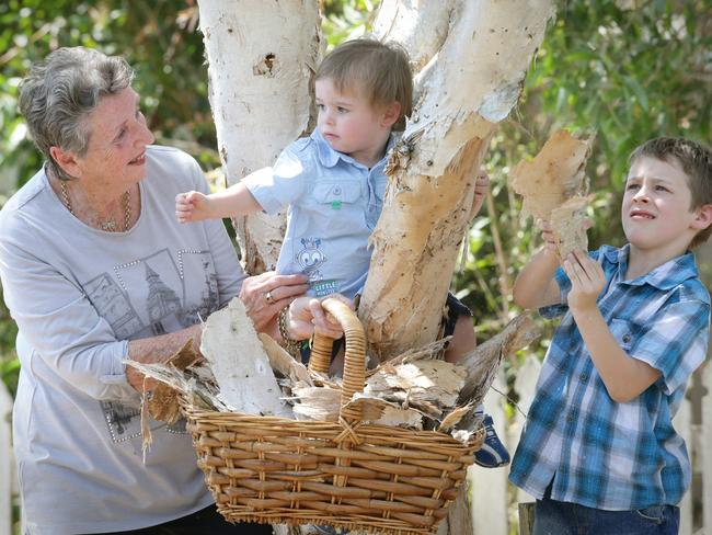 The paperbark tree is the most distinctive of the Melaleuca. Pictured is Oriel Lyon and great grandchildren, Blake and Mitchell Lyon.