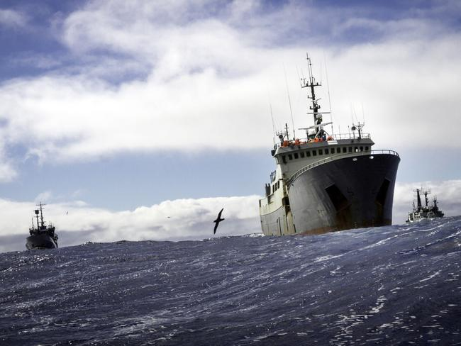 Interpol wanted poaching vessel Thunder shadowed by Sea Shepherd ships Bob Barker and Sam Simon. Picture: Simon Ager