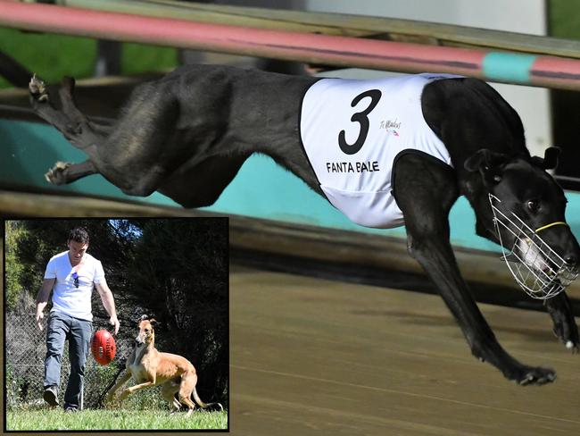 Bruce Tycoon had a ball playing footy with Boomer, whereas Fanta Bale (main) prefers to save her energy for the racetrack.