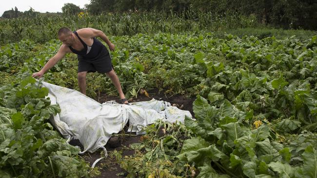 A man covers a body with a plastic sheet near the site of a crashed Malaysia Airlines passenger plane. Rescue workers, policemen and even off-duty coal miners were combing a sprawling area. Picture: AP