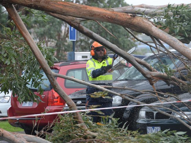 A tree fell across cars at Frankston Station. Picture: Chris Eastman