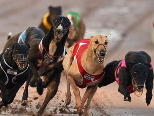 NT_NTN_SPORT_GREYHOUNDS_23OCT16