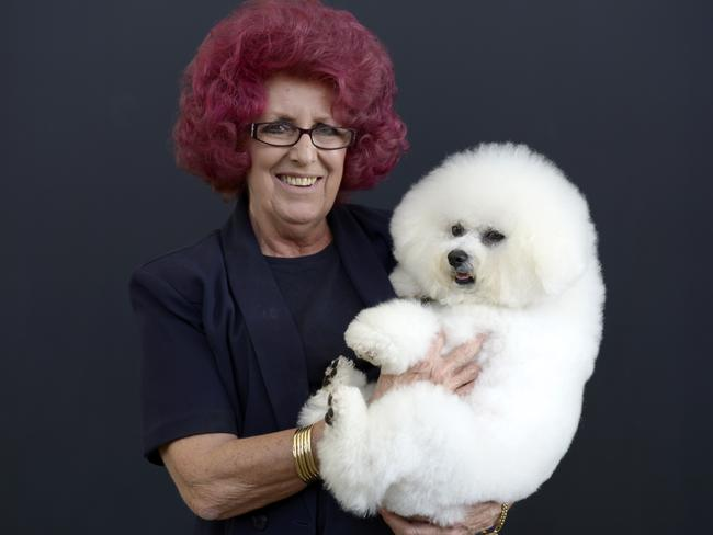 Dogs are people too … Pamela Page with her Sydney Royal Easter Show Supreme Champion Bichon Frise, Kissing Bandit. Picture: Dave Swift
