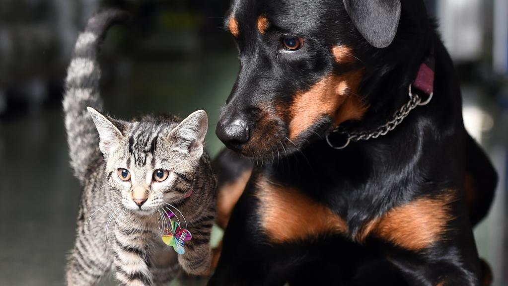 When it comes to cats versus dogs, cats may have regained the lead — by a nose.